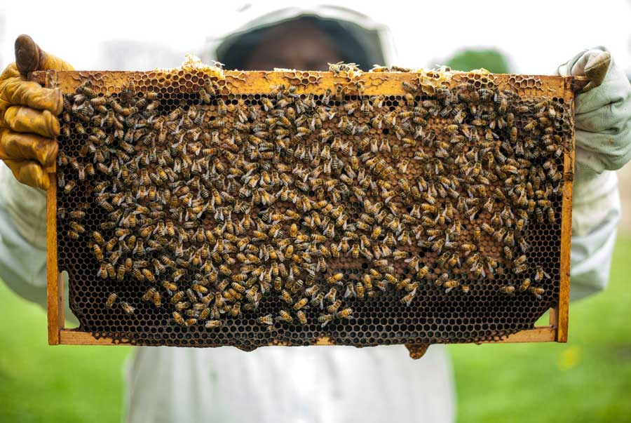 hepta global honey